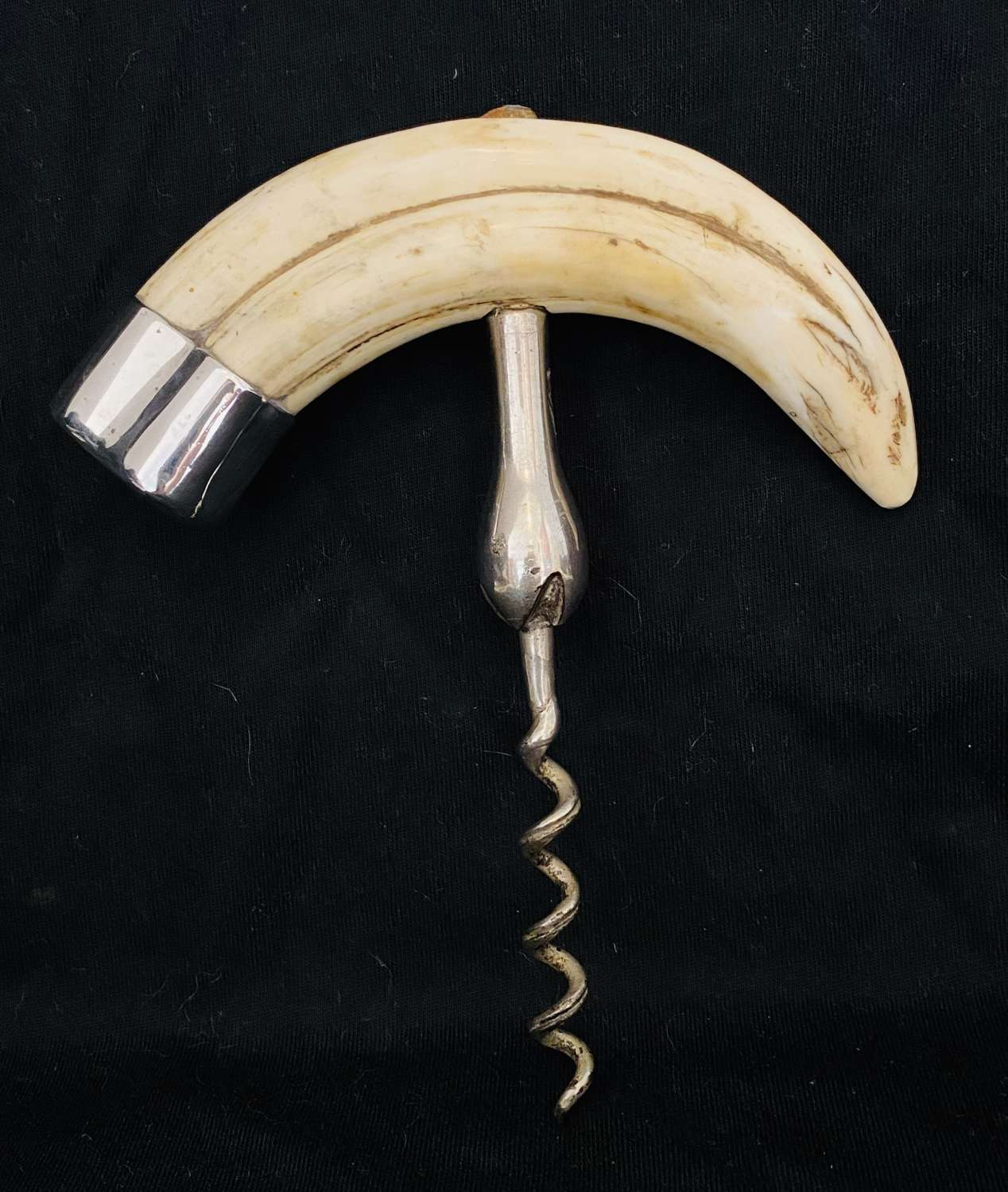 Walrus Tooth Corkscrew